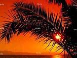 palmenstrände mit sonnenuntergang